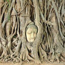 Buddha head in the tree roots Ayutthaya