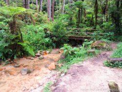 Cameron Highland Jungle Walk