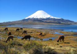 Parinacota vuklán, Chile