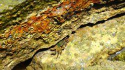 Fossil Shell Beach Krabi Thailand