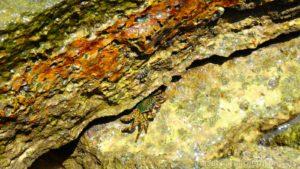Fossil Shell Beach Krabi Thajsko