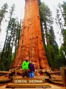 General Sherman Tree Sequoia