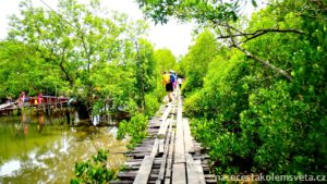 Mangroves on Koh Lanta