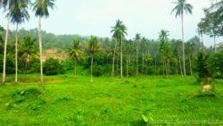Koh Samui Palm Grove