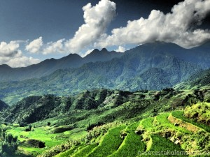 Rice fields and mountains Sapa Vietnam
