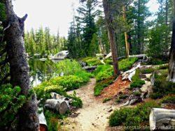 Sunrise Lake Trailhead Yosemite
