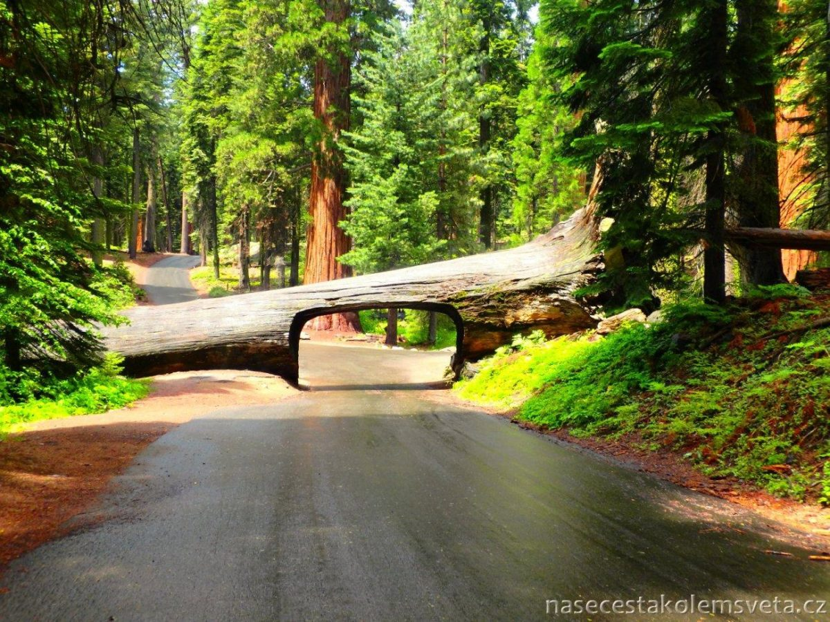 Tunnel Log Sequoia