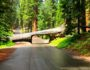 Tunnel Log Sequoia